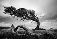 Patagonia-Tree-